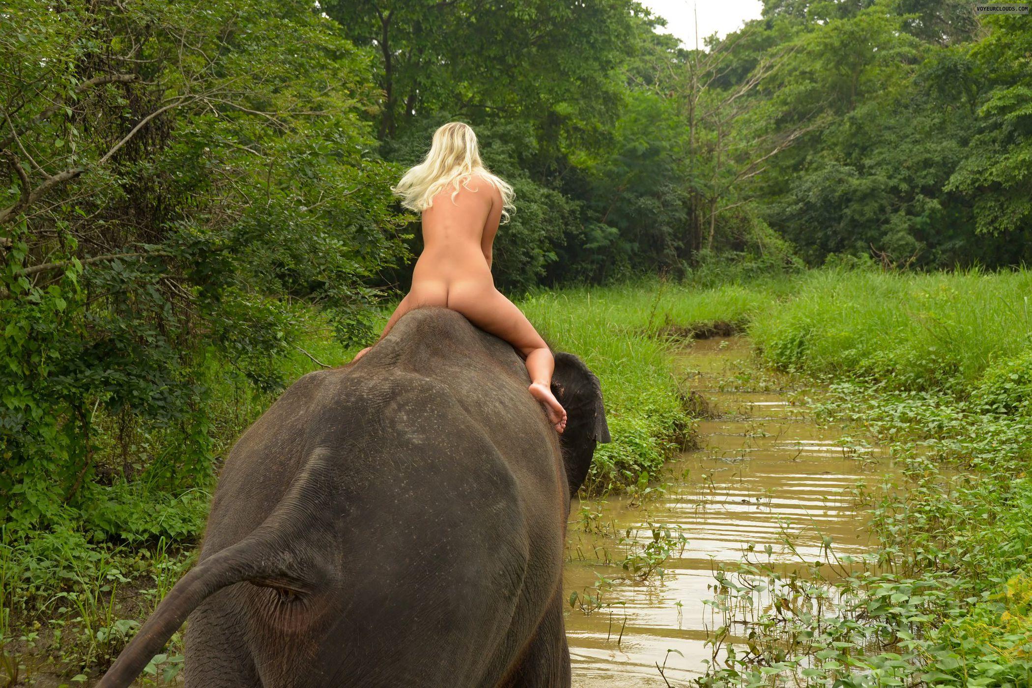 Porn Elefant